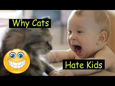 Funny Babies & Cats Moments | funny cats | Funny vine