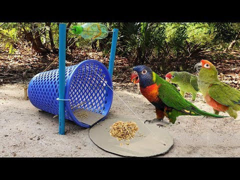 Building Easy Parrot Trap Make From Basket N Cardboard - Technology Parrot Trap