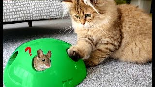 Kitten Playing with Mouse Toys