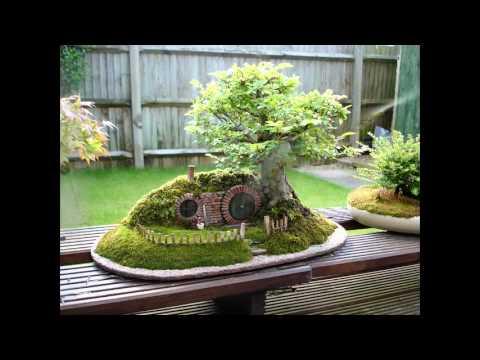 бонсай виды растений фото