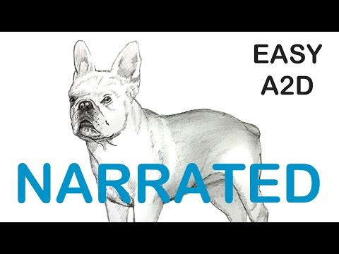 How To Draw A French Bulldog (NARRATED) Step By Step