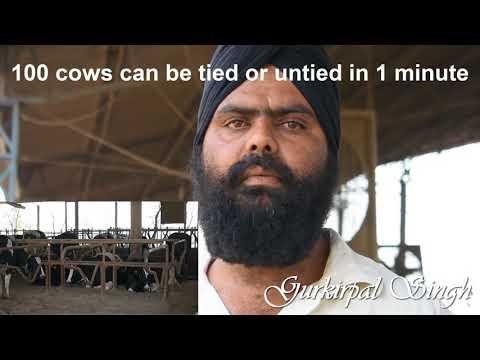 Tips for operating Modern Dairy Farm Moga Punjab