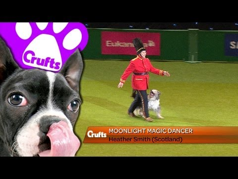 Heelwork to Music - Freestyle International Competition - Crufts 2013