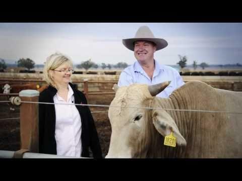 Cattle feedlot - the Herberts' story - Australia's oldest farming family