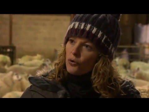 Lambing Live 2014, Series 3 Episode 3