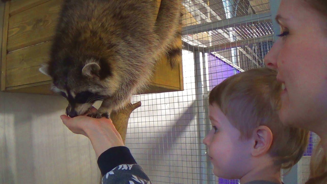 Макс в зоопарке кормит животных