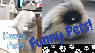 Funniest 🐶 Dogs and Cats 😻 Awesome Funny Pet Animals - Kawaii Pets