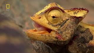 Самые опасные животные. От пустыни до саванны