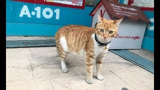 Fenomen kedi market çalışanları tarafından sahiplenildi