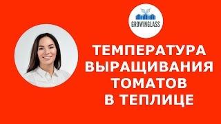 видео какая оптимальная температура должна быть в теплице для помидор