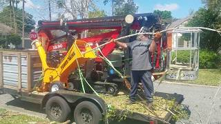 Chipping Crepe Myrtle With 5 In. PowerKing Wood Chipper