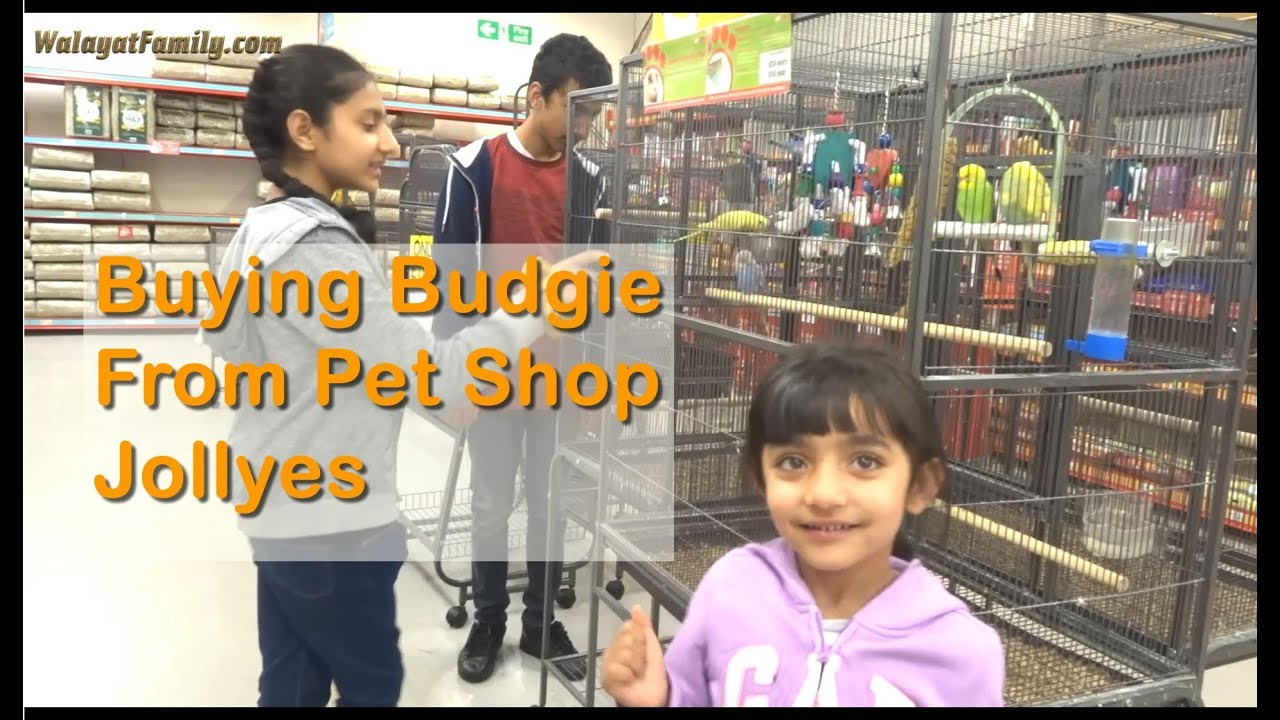 Buying a NEW Budgie, Parakeet From a Pet Shop - Jollyes UK - YouTube