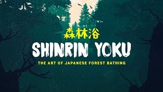 Shinrin Yoku: The Art of Forest Bathing