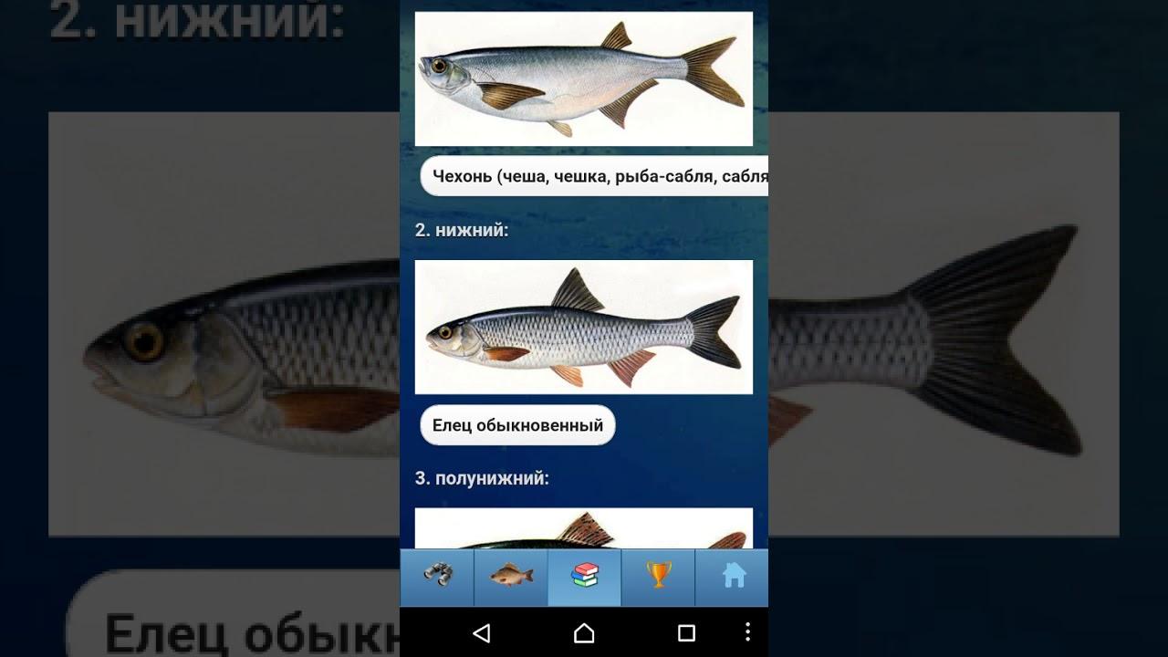 ЭкоГид: Определитель рыб России