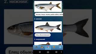 видео Простая биология пресноводных рыб