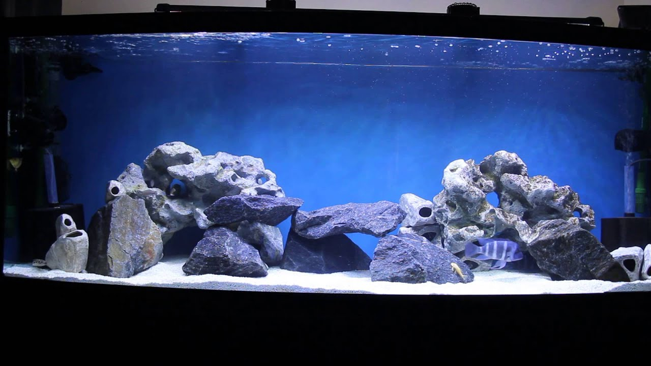 my oceanic 175 gallon bow front fish tank update with new