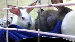 Rabbits at Jacksonville's Mega Pet Adoption Event