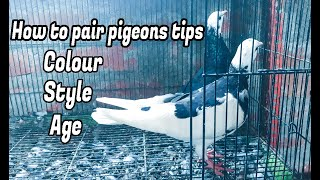 How to pair pigeons tips