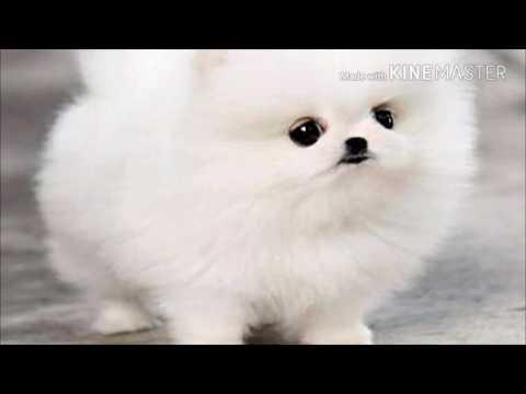 Сладки кученца!😁