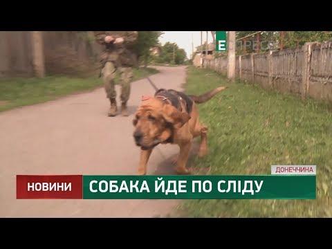 Собака йде по сліду