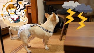 多摩川花火大会2017の日の雷が我が家のほうにもやってきてました。 雷か...