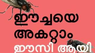 ഈച്ചയെ അകറ്റാം ഈസി ആയി How to get rid of houseflies naturally