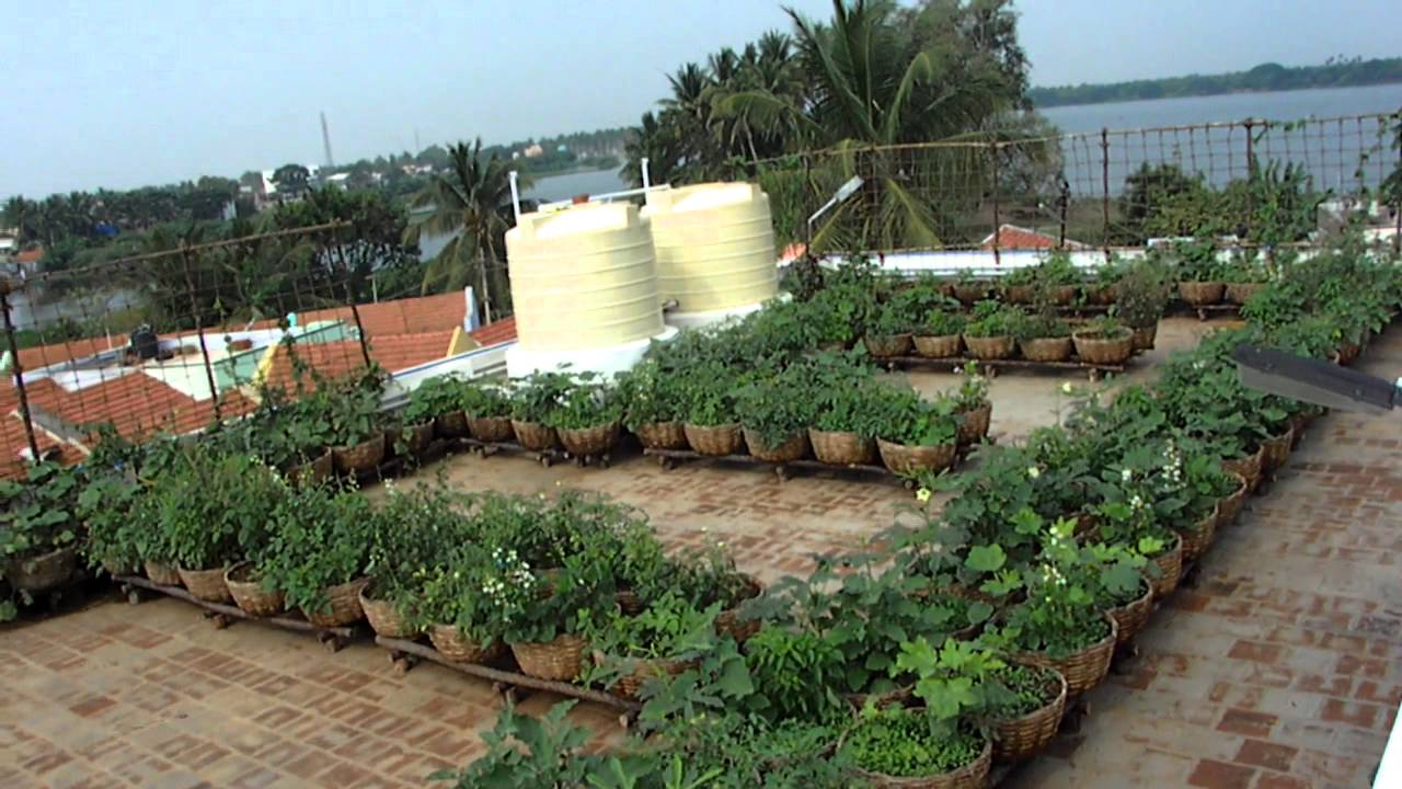 Vegetable Roof Garden - Sulur Panchayat Union Office ...