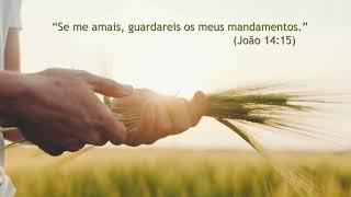 Versículo do Dia | João 14:15 | IPP TV
