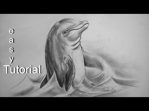easy-dolphin-for-beginners-graphite-pencil-drawing