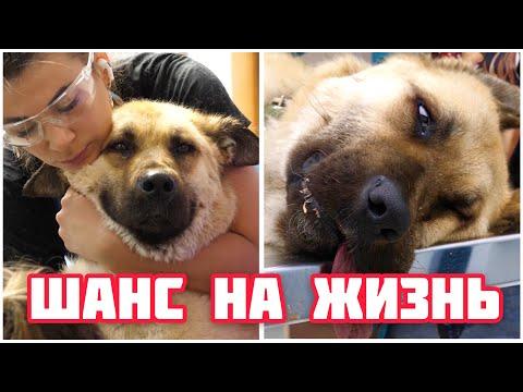 Спасли собаку от КАМНЯ в кишечнике. Бездомная собака с заправки.