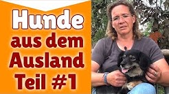 ►► Hunde aus dem Ausland Teil #1 ✔ Steffi`s Meinung zum Thema: Hunde aus dem Ausland