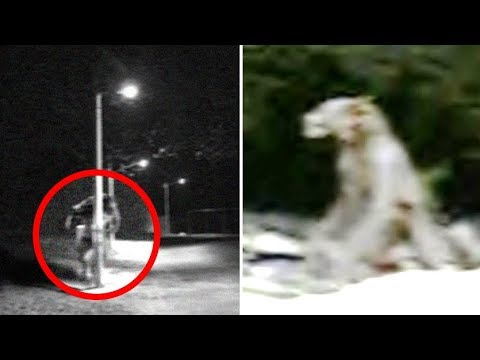 The Real Life American Dogman | Sightings & Encounters ...