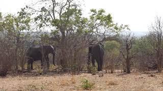 Chobe National Park, Elephants, Botswana, Oct 2018