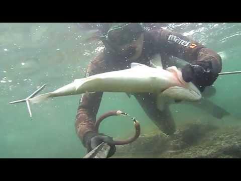 PESCA SUB BA: PRIMAVERA BY ANTONIO GRECO spearfishing