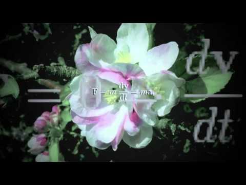 Magnetfisch - Fruchtkönig V1 (Remix)