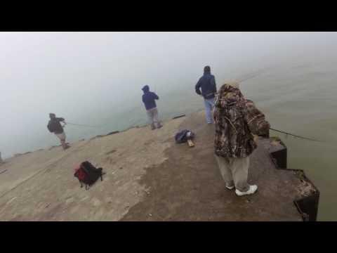 Large King Salmon Landed from Pier on Lake Michigan