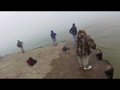 Large King Salmon Landed From Pier On Lake Michigan