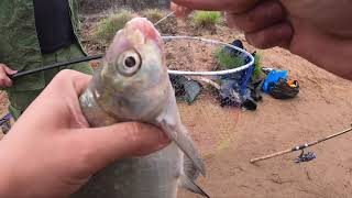 Рыбалка на реке Самара. Ловля леща на фидер.