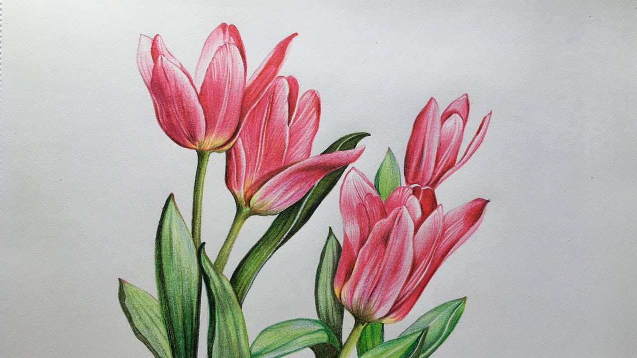 Tulip Flowers Drawing Flower Drawing In Color Pencils Youtube