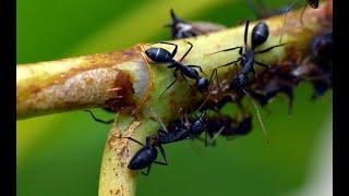Best Documentary | #NationalGeographic  | Army #Ants | #BBC Wildlife