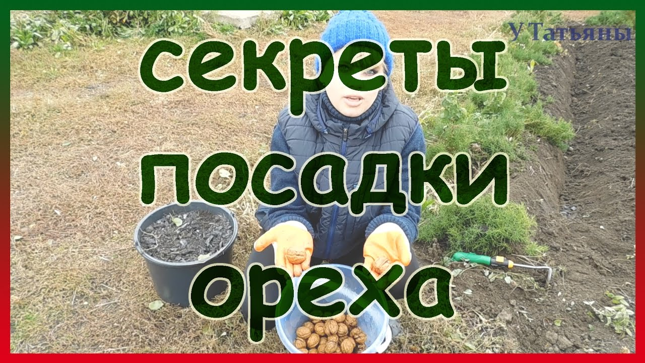 посадка грецкого ореха из ореха осенью
