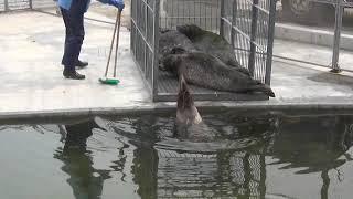 おたる水族館の冬支度 アザラシのお引越し画像