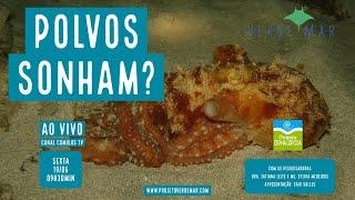 Sidarta Ribeiro e o Projeto Cephalopoda falam sobre comportamento de polvos - VERDE MAR AO VIVO #30