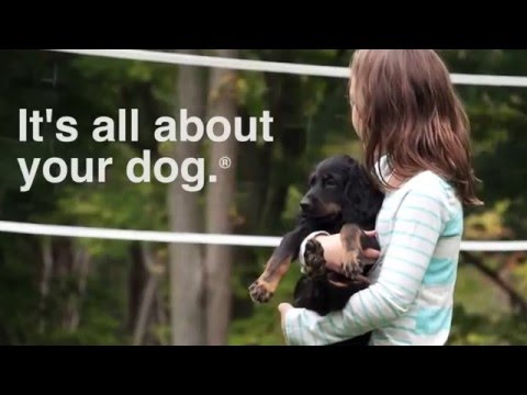 dogwatch®---gaithersburg-invisible-fence®-alternative