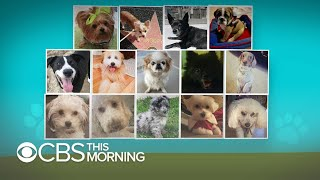 Dog deaths under care of Rover, Wag sitters raise questions about screening policies