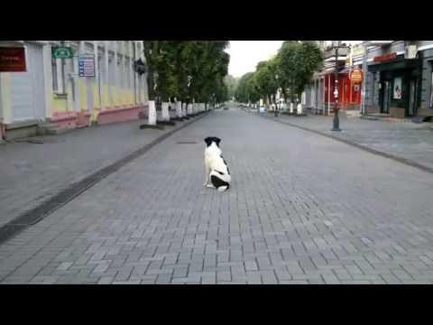 знакомства города луцк
