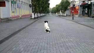 Луцк, город призрак(Данные видео были сняты 16.06.2016 года. Людей практически нет, только птицы и животные. Всё дело в том, что было..., 2016-06-19T21:04:55.000Z)