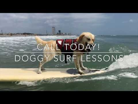AWESOME DOG SURFING LESSONS ON SOUTH PADRE ISLAND TEXAS!