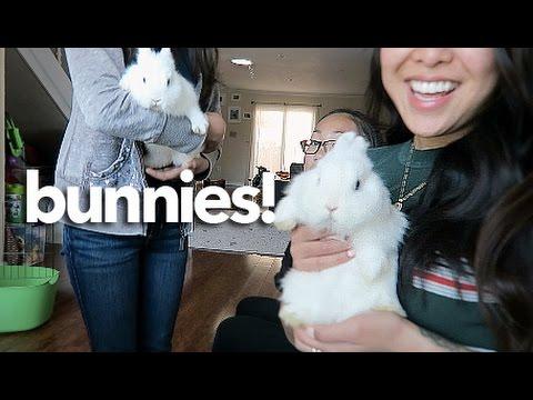 NORWEGIAN DWARF BUNNIES 🐰  | Vlog