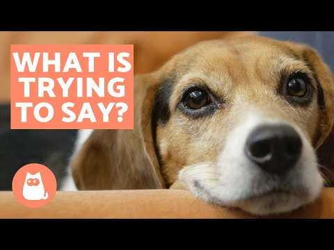 10 Things Your Dog is Trying to Tell You